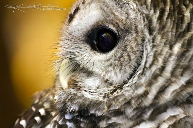 Birds of Prey Photography