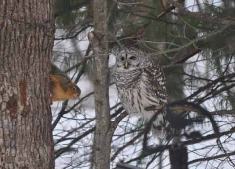 Winter Animals Hike