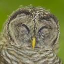 larry tibbet owl eyes