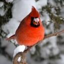phil kirkman cardinal