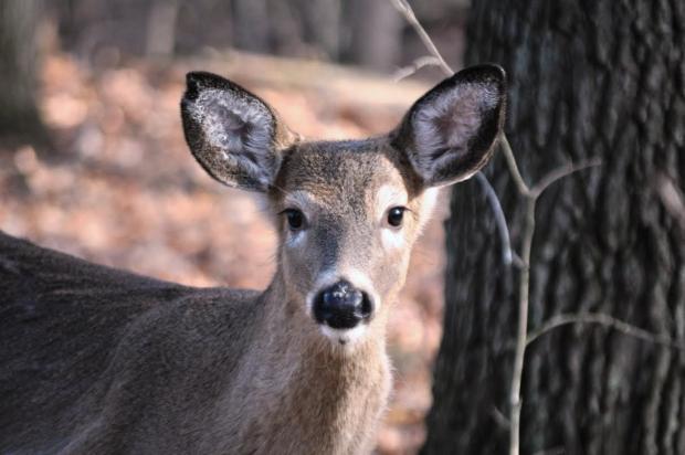 Hunter's Safety Certification
