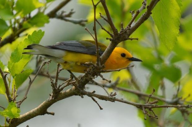 Birds & Bagels