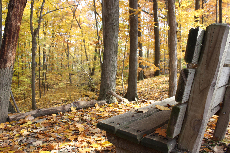 fall bench