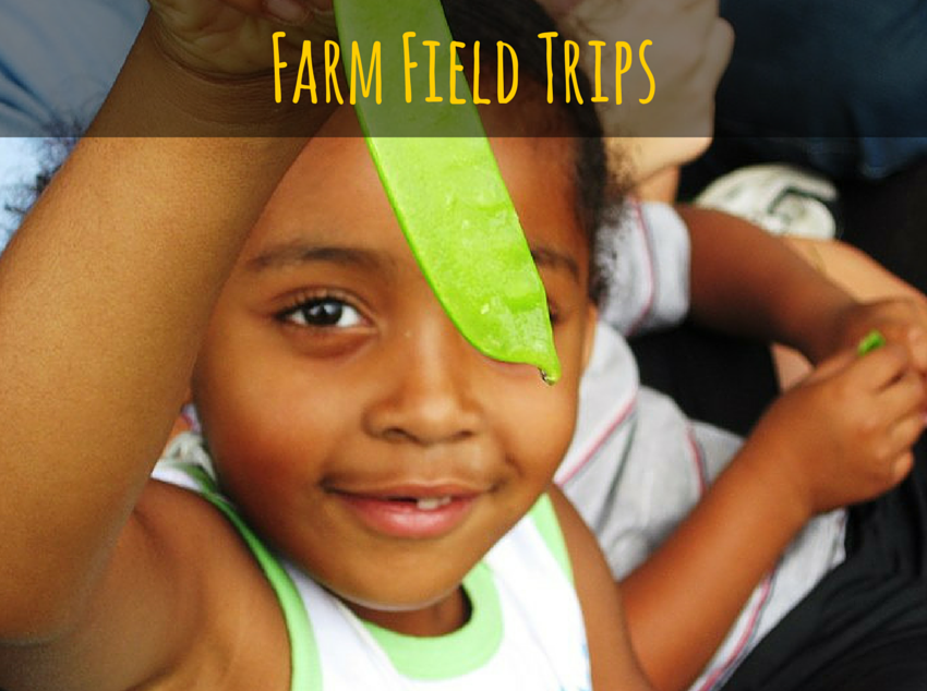 Link to Farm Field Trips