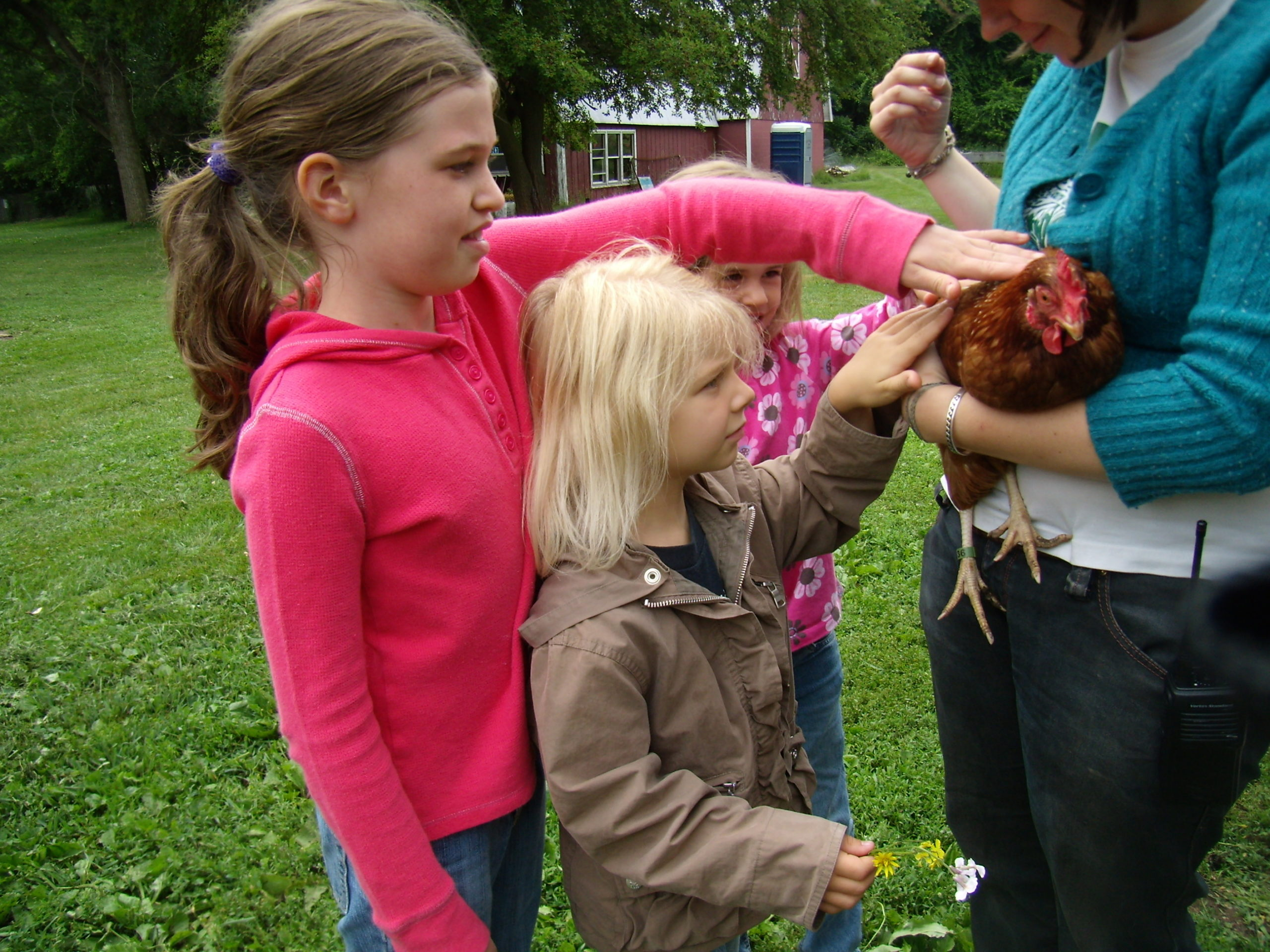 kids petting chickens outside