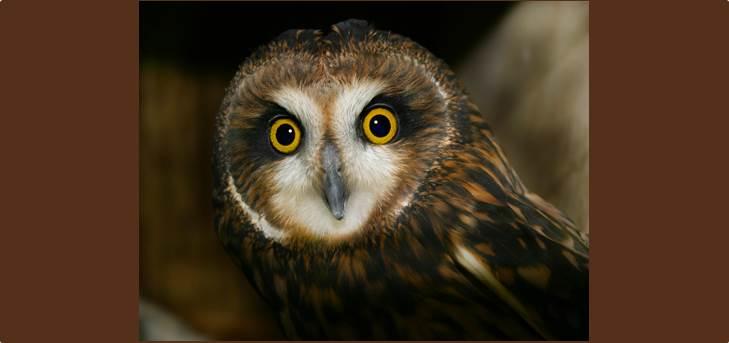 Xena the owl