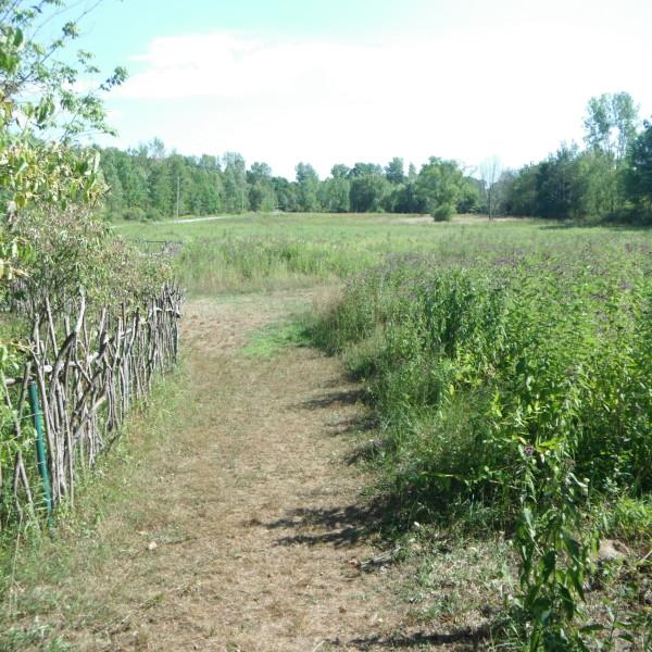 Meadow 001