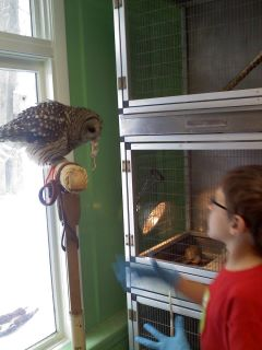 Owl and rat