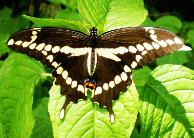 Butterfly Monitoring Training