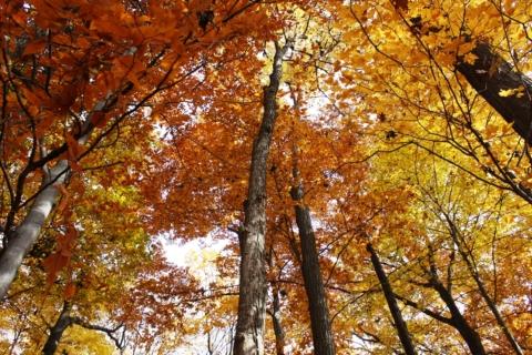 Fall Trail Guide Training
