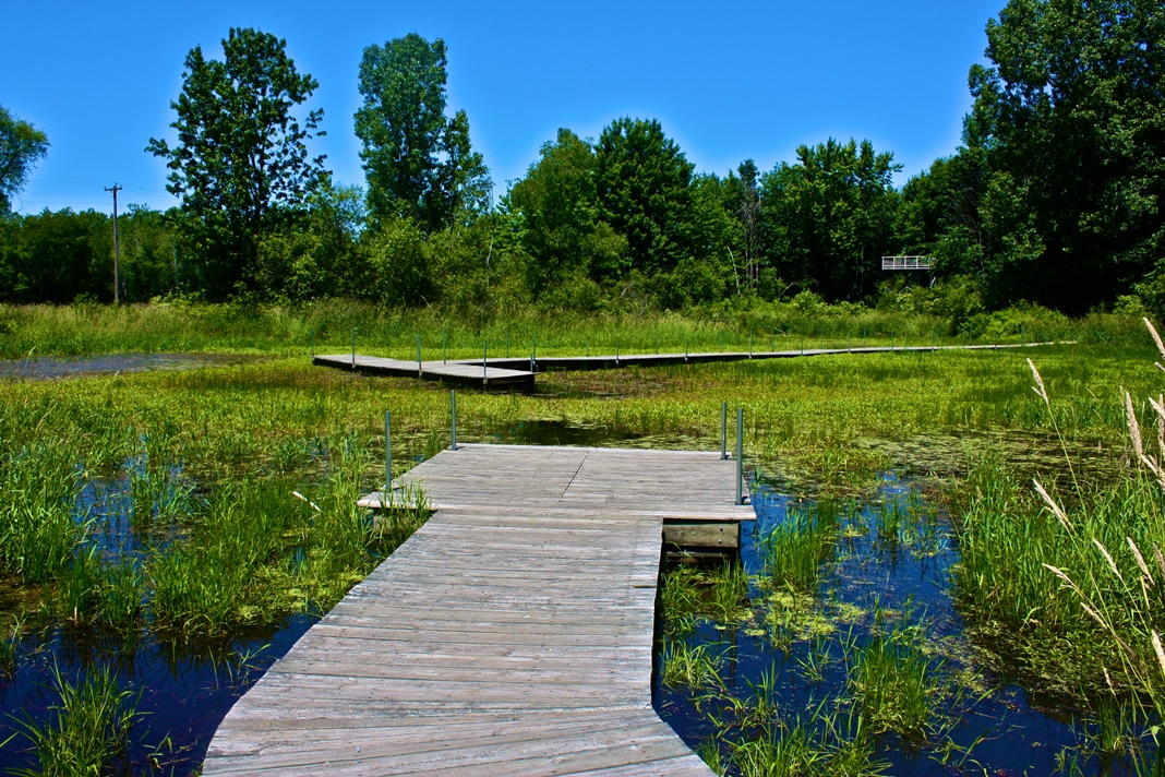 marsh pond boardwalk