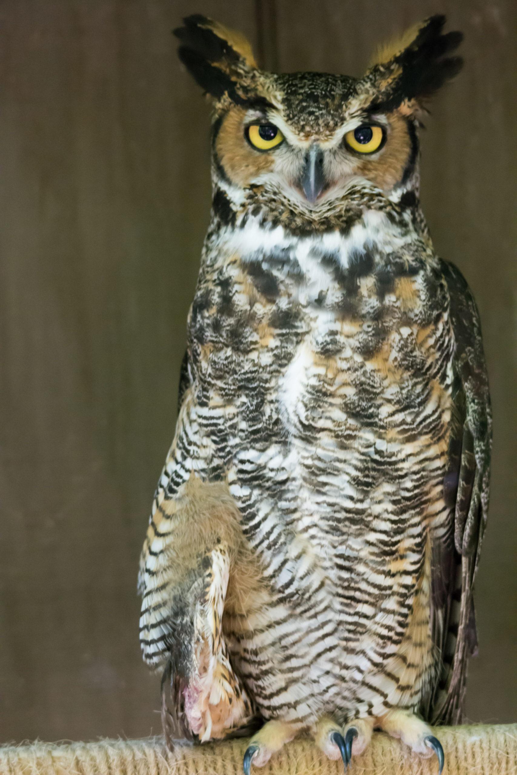 katherine the owl