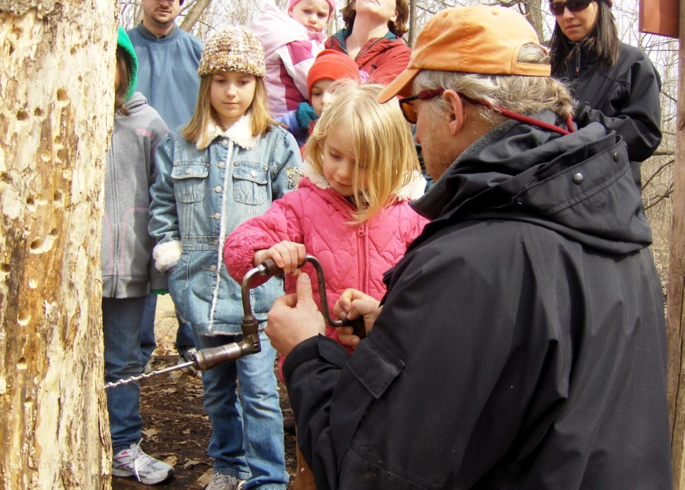 children learning to tap a maple tree