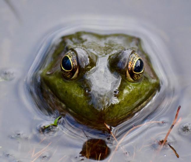 green frog face