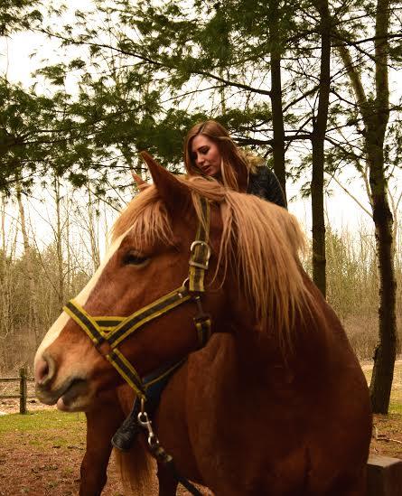 sugarbush horse