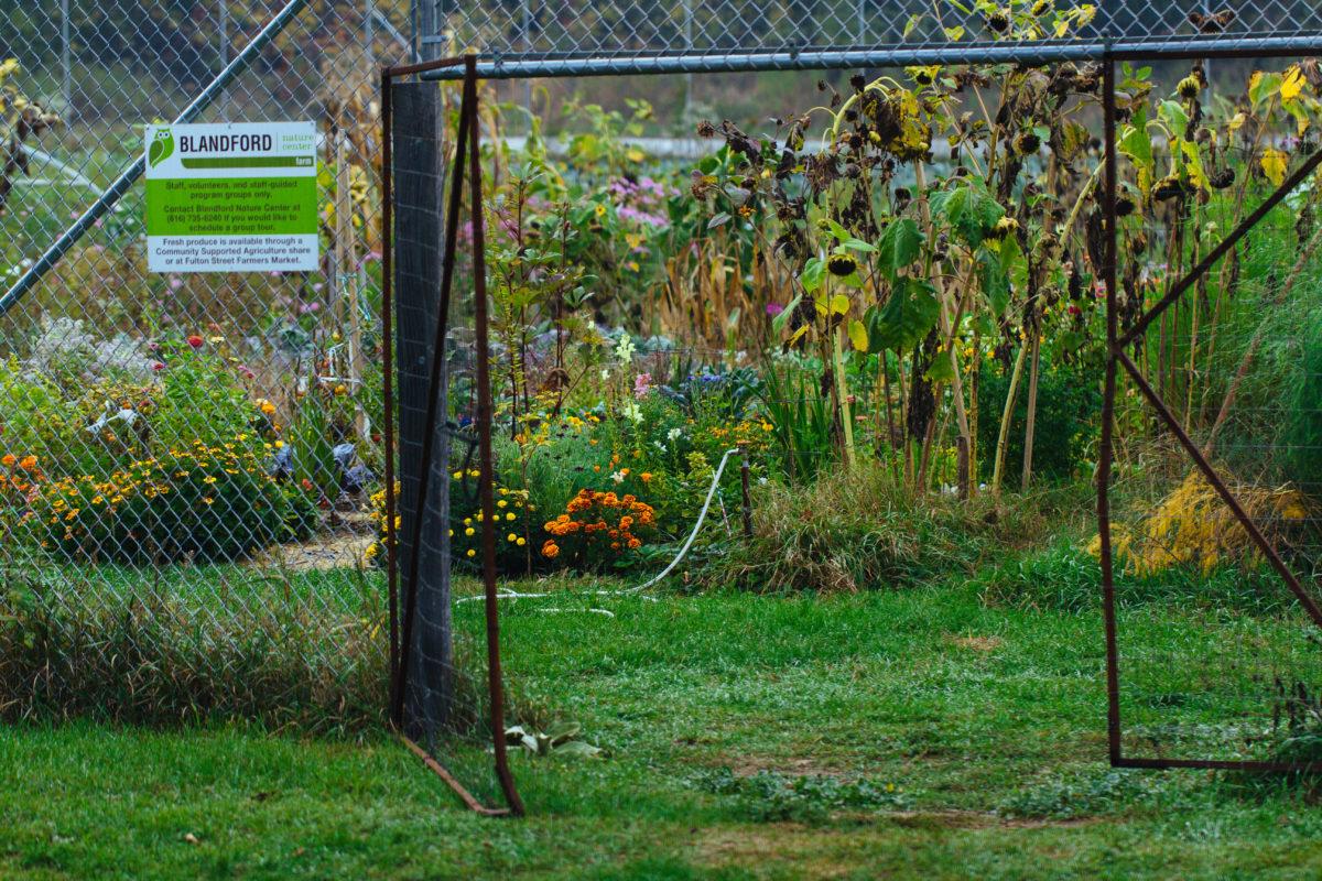 blandford garden