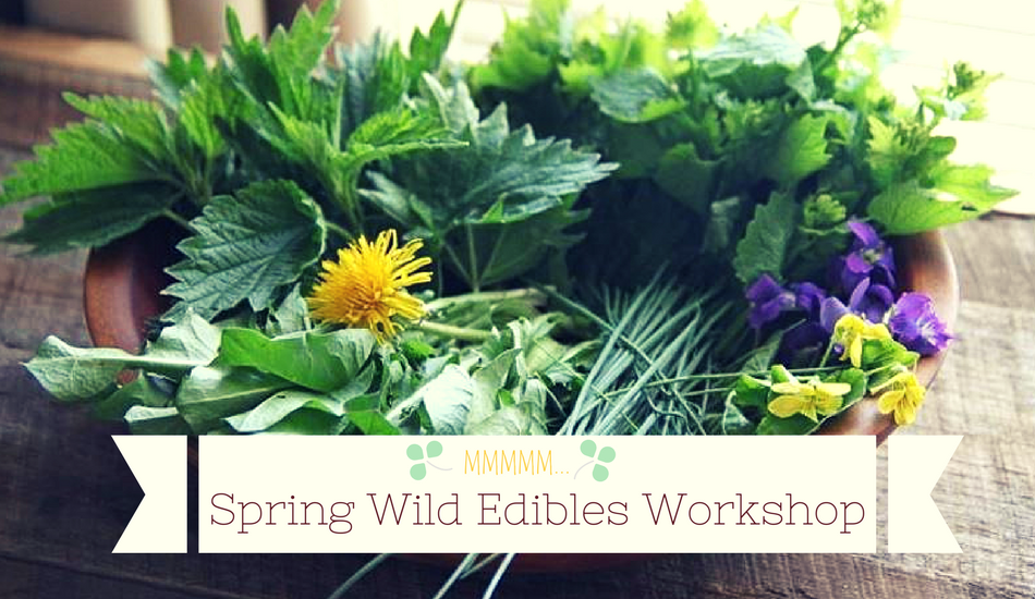 spring wild edibles workshop