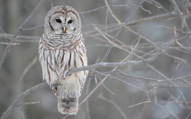 Winter Michigan Animals