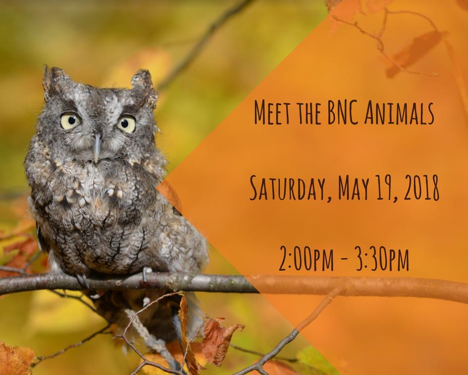 Meet the BNC Animals