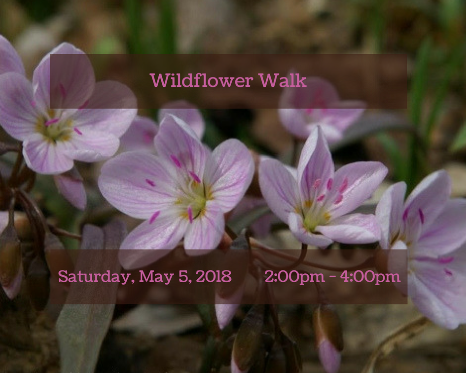 Wildflower Walk