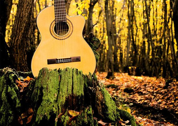 guitar in the woods