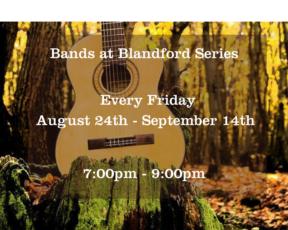 Bands at Blandford guitar in the woods