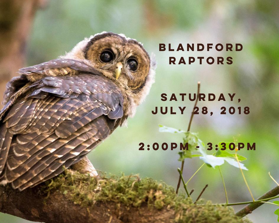 Blandford Raptors