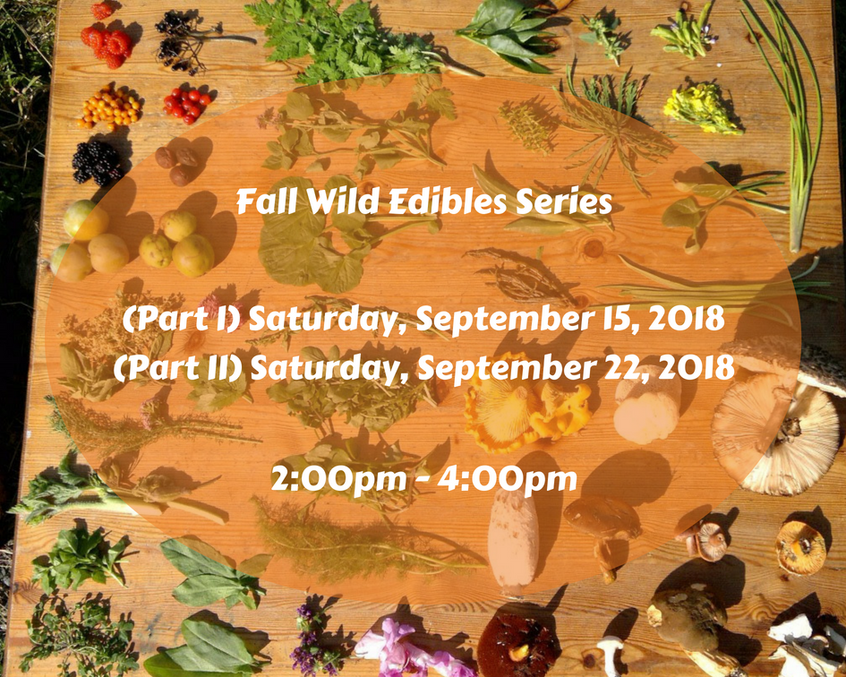 Fall Wild Edibles Series