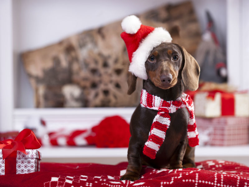 celebrate the holidays with your dog