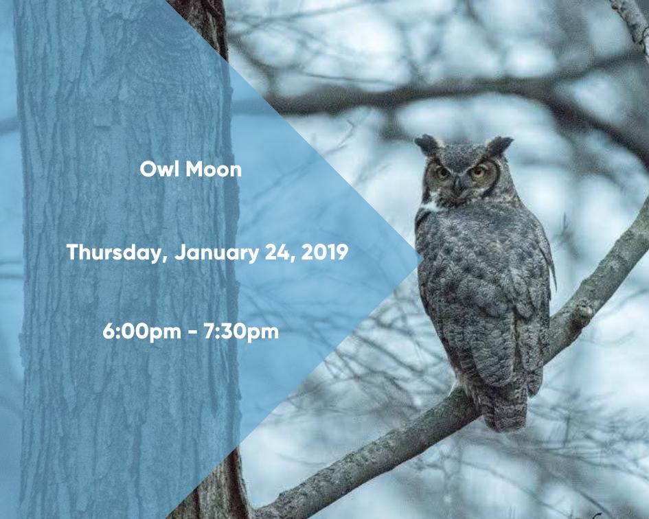 Owl Moon II
