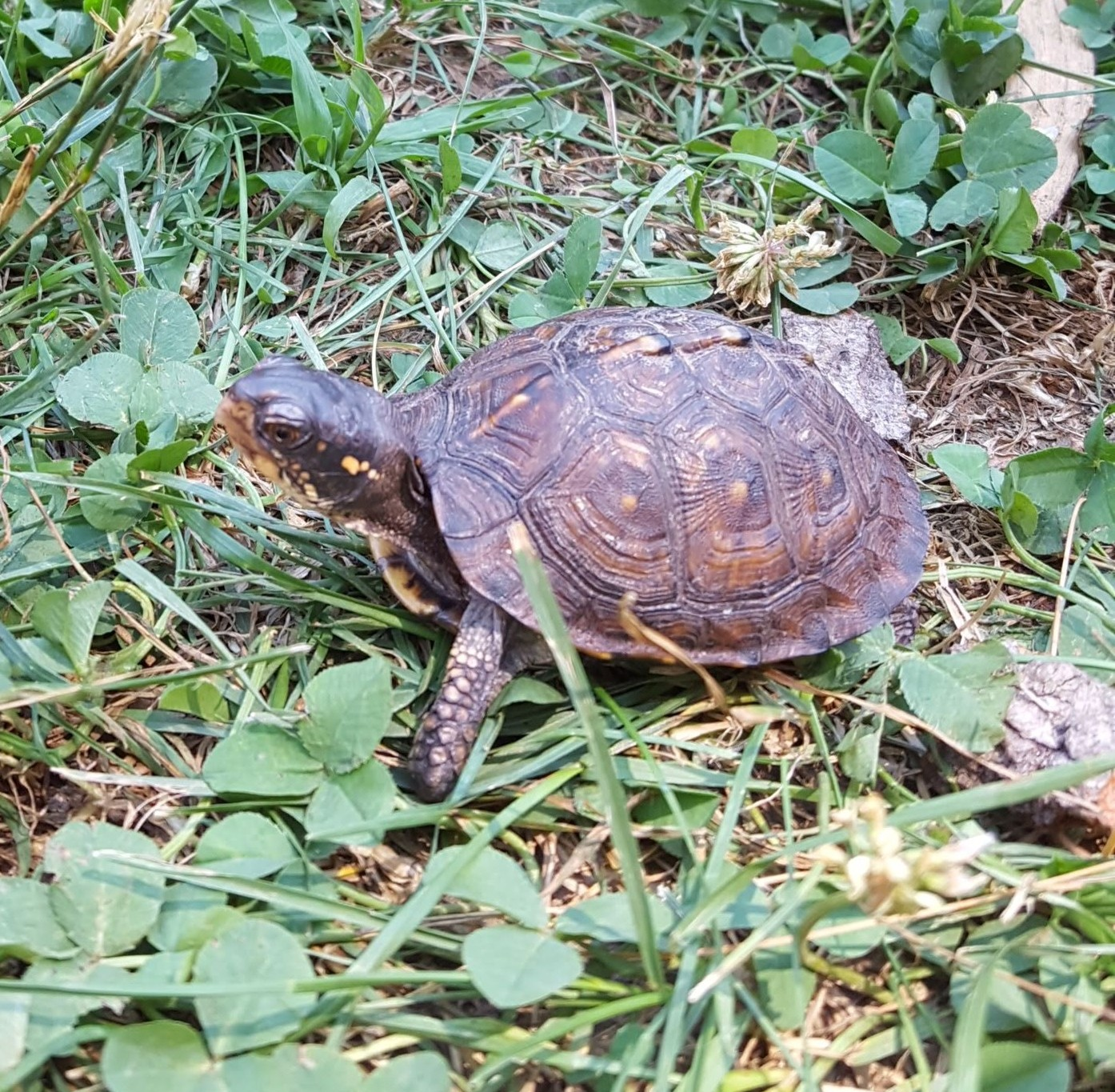 turtle at blandford nature center