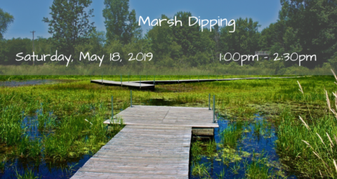 Marsh Dipping
