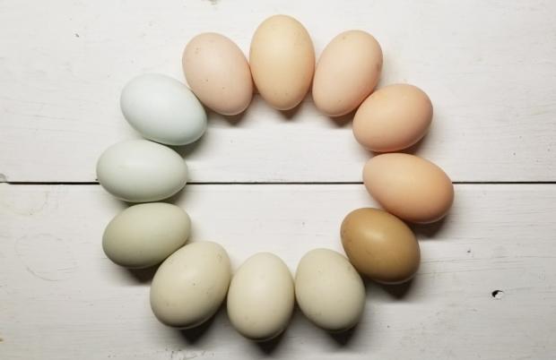 FARM | Drop In – Chicken & Egg