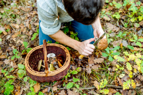 Intro to Foraging