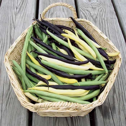 Know Your Veggies 101: Bush Beans