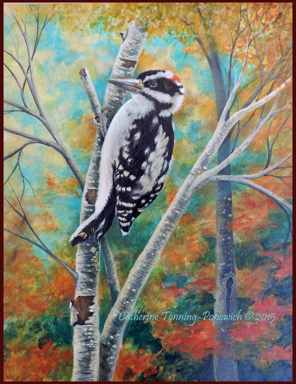 Downy Woodpecker on Birch