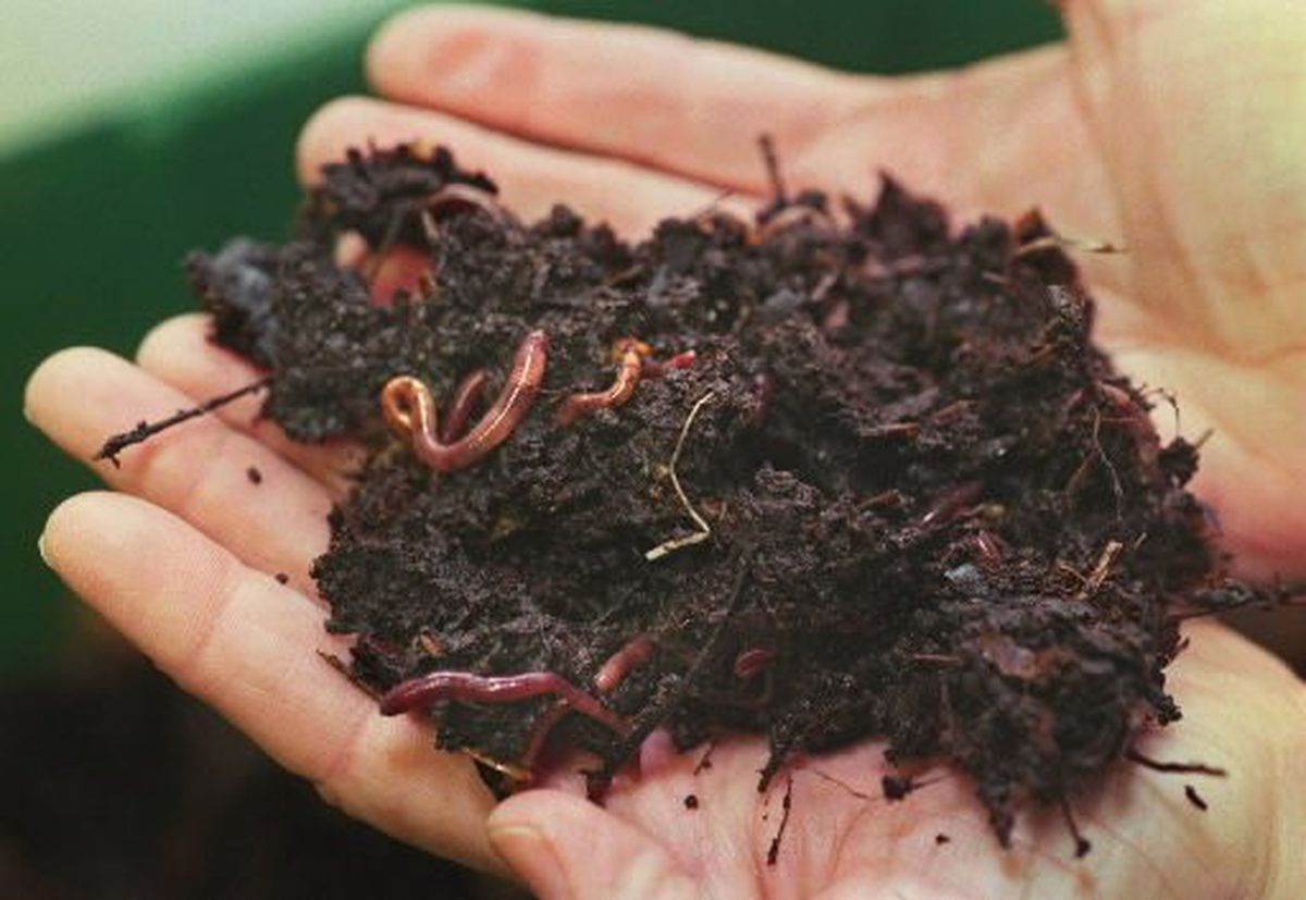 Worms Vermicompost