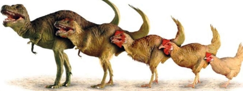 Chickens & Dinosaurs, Oh My!