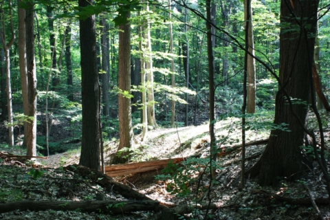 Forest Secrets Revealed – Family Edition