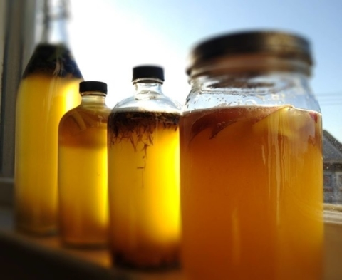 Kombucha Workshop – Cancelled