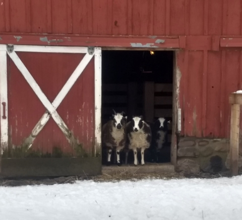 Brrr in the Barnyard
