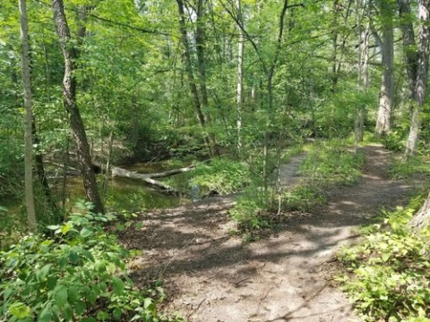Hike with a Blandford Nature Center Naturalist- Cancelled