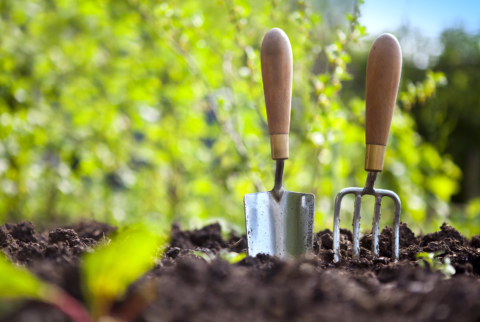 Vegetable Gardening 101: Adults – Cancelled