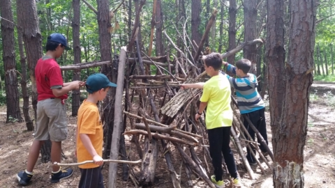 Fantastic Forts in the Forest