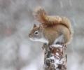 Winter Animal Hike